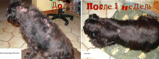 Усовершенствованный натуральный крем Dermacton для собак с проблемами кожи, 100 г.