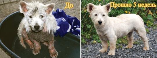 Спрей Dermacton для собак  - при аллергии, зуде, поражениях кожного покрова и шерсти, 100 г.