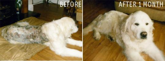 Твердый шампунь, крем и спрей Dermacton  для собак с зудящей и раздраженной кожей, 3х100 г